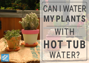 Water plants with hot tub water