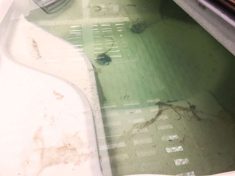 Old unsanitized hot tub water with mold