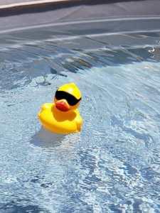 Plastic duck floating in water