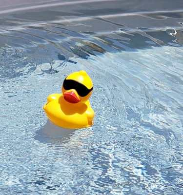 Plastic duck floating in water